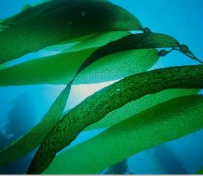 Красота и здоровье из глубин моря